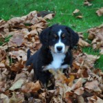 Baby Anja in the leaves