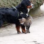 Paula und Ihr Katzenfreundin