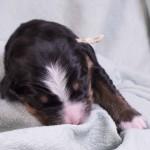 Pius vom Frühlingshof, 1 Woche alt