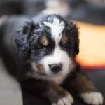 Benjamin (hellblau), knapp 4 Wochen alt