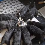 Am Futterring, 4 Wochen alt