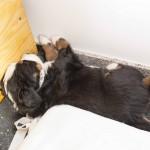 Bjelle-Hetti, 4 Wochen alt
