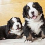 Baki (Orange) und Bruno (Grün), 4 Wochen