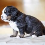 Baki (Orange), 4 Wochen alt