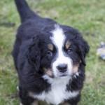 Paul-Theo (Lila), knapp 8 Wochen alt