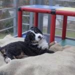 Bente (Rot), 7 Wochen